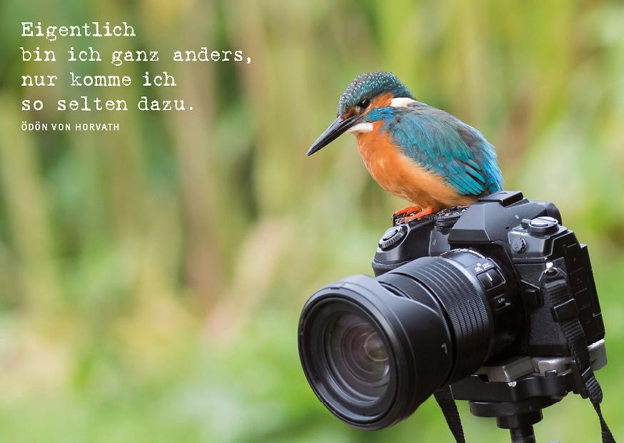 Ein Eisvogel sitzt auf einer Kamera.