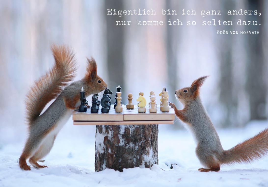 Zwei Eichhörnchen spielen Schach